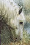 White Horse (Watercolor)