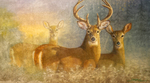 White tailed deer ( oil painting )