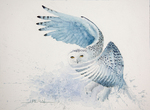 Snowy Owl Watercolor